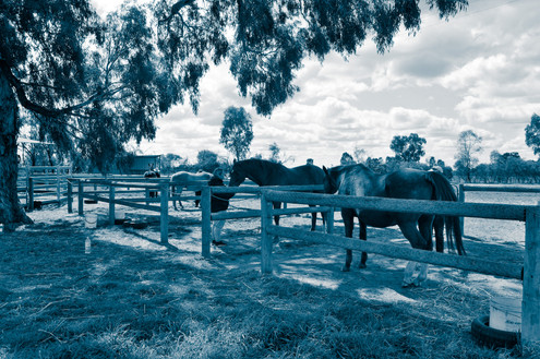 equine reiki training