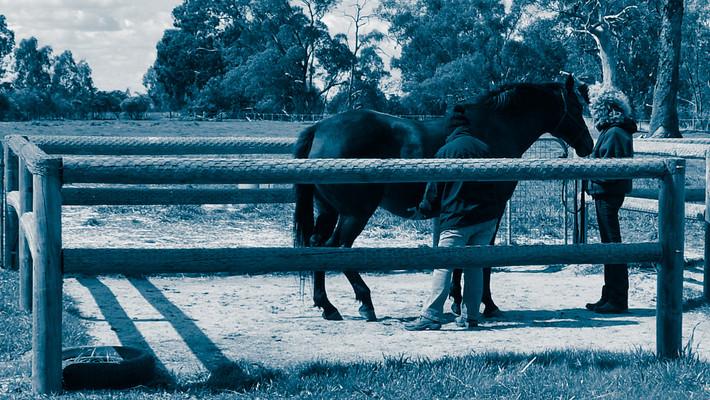 equine reiki level II training
