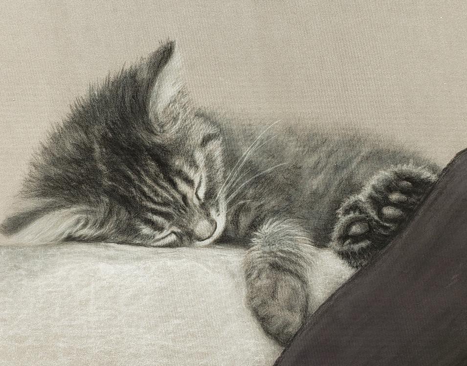 Sleeping Kitten #3