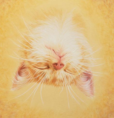 Sleeping Kitten #1