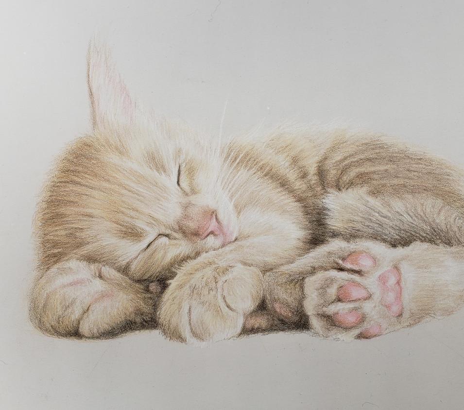 Sleeping Kitten #2