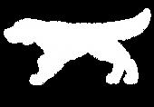 Sugar-Creek-English-Setters-white-logo.p
