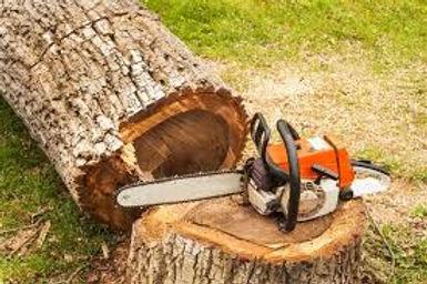 Tree Fell.jpg