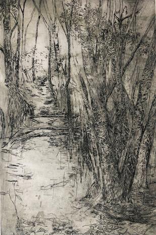 forêt de Pyrimont