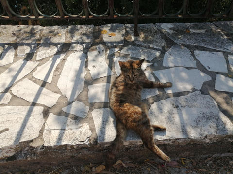 A chilled out cat