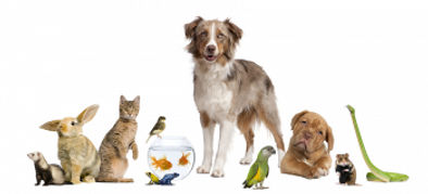 Dogs, Cats, Birds, Goldfish. We provide per sitting services across Sydney.