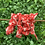 Thumbnail: Red Japanese Floral