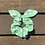 Thumbnail: Green With White Floral