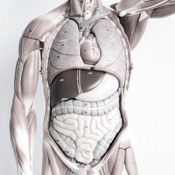 anatomia i fizjologia + aseptyka i antyseptyka