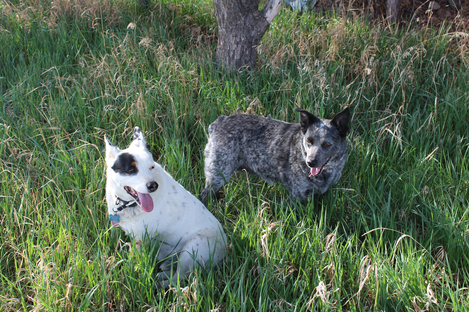 Millie and Trigger