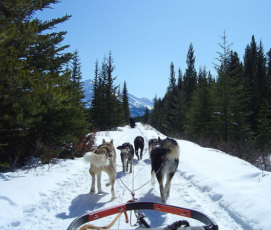 Stephen Shaw dog-sledding in Bannff, Canada