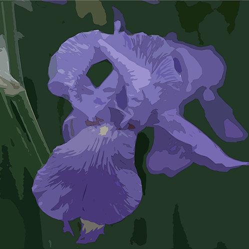 """Ursa Schoepper """"Iris (Variante I)"""""""