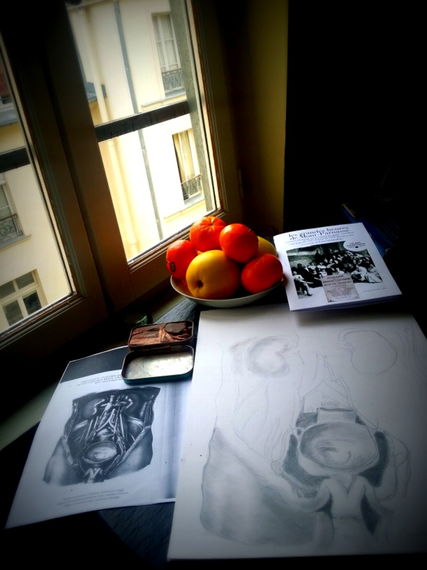 anatomical illustration studio