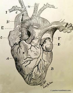 = the heart =