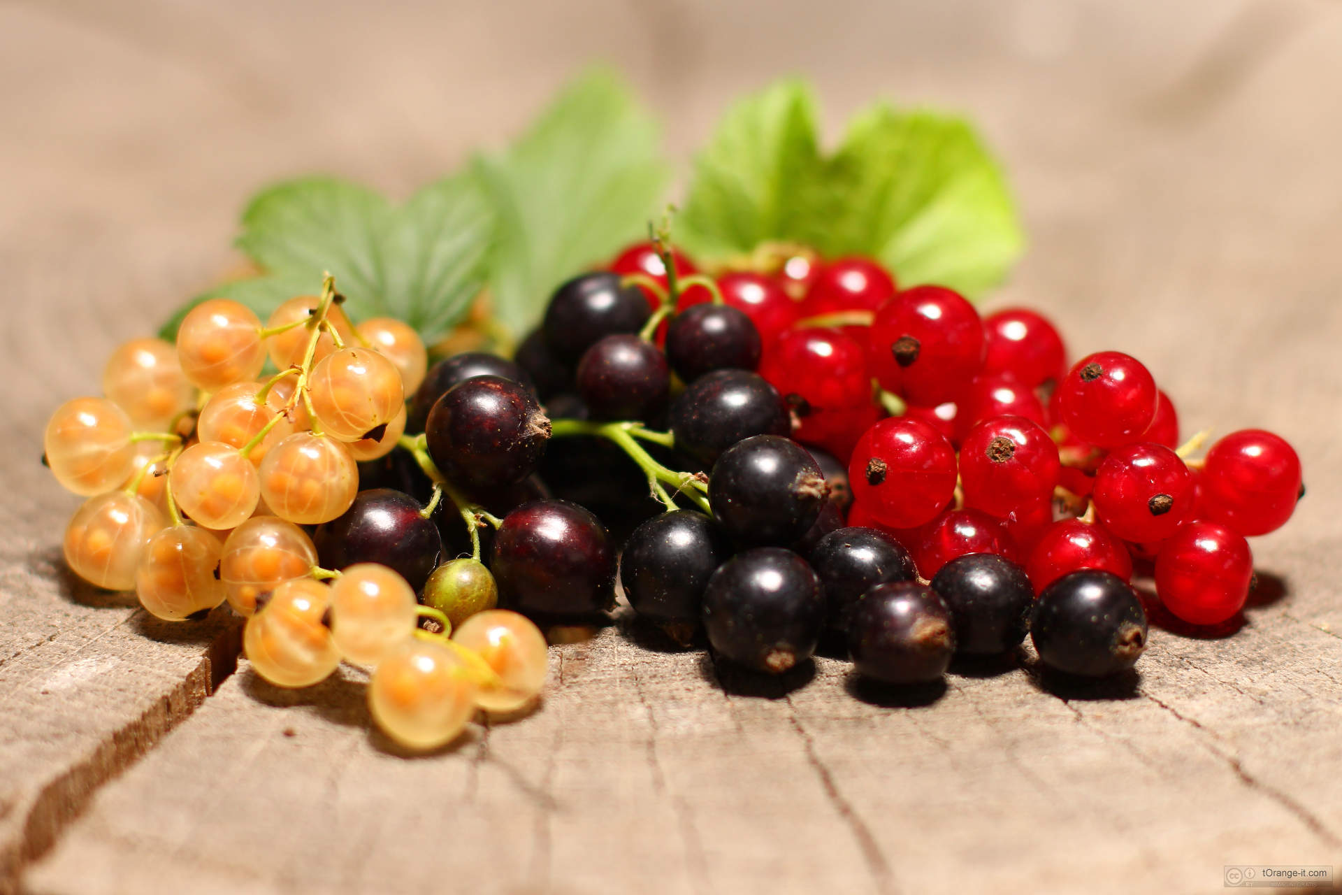 Grappa-Aromatica-al-Ribes-Ricetta