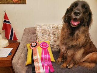 Ziva, the 1st Leo to place in the TOP 10 at AKC Rally Nationals