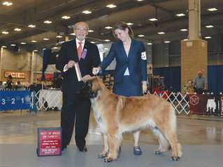 It's Official - GCH CH Bluebonnet's On The Rocks Ruffina CGC