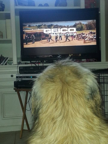 and yes, Revere loves TV time
