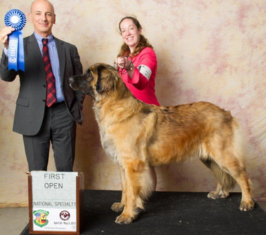 Reba wins Open class National Specialty