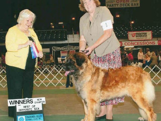 Introducing New AKC CH West Mtn D'Power To Dream Of Bluebonnet CGC TKN - 'Addie'