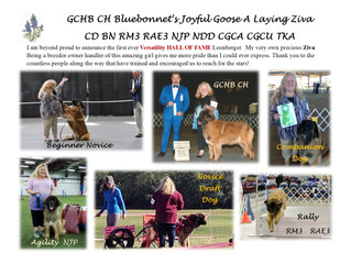 Ziva is the First Versatility HALL OF FAME Leonberger!!!!