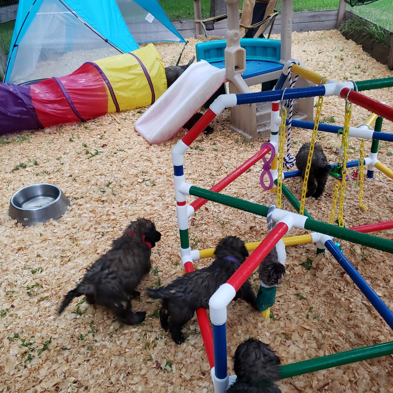 playyard 5-6wks