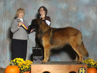 Oskar was the big winner in Lawrence, KS