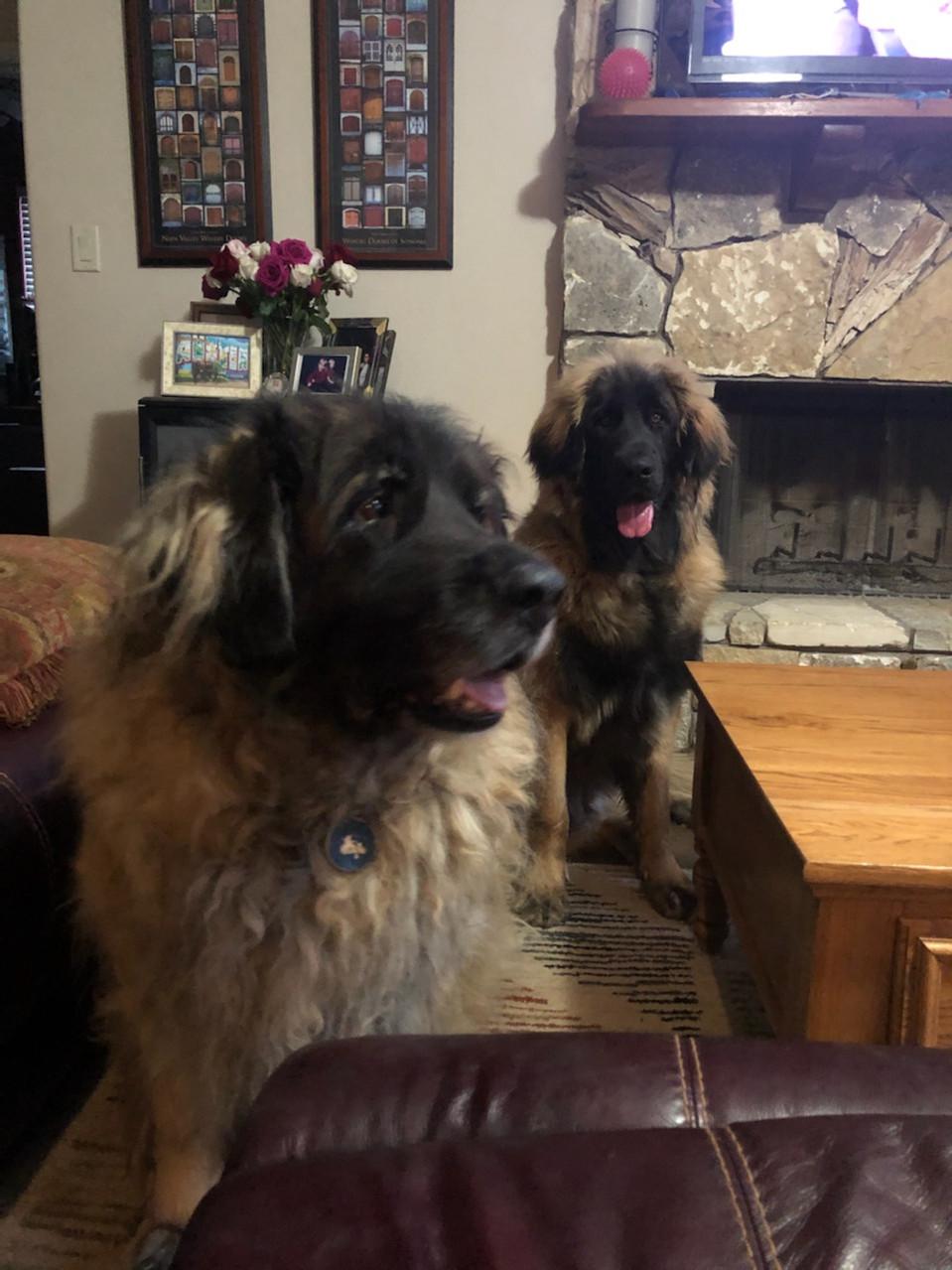 Tessa and Beau