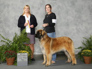 Introducing Grand Champion (GCH CH) Bluebonnet's On The Rocks Ruffina CGC and Topeka, KS results