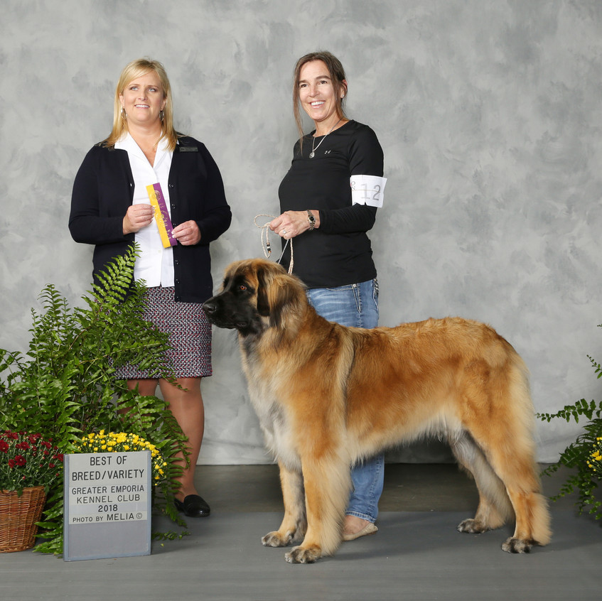 Ruffina earns her GCH