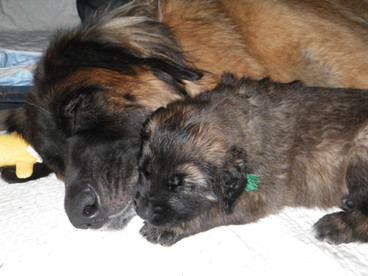 Storm and one of her babies Mr. Green