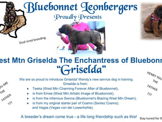 Pink - aka Griselda has joined the Bluebonnet family