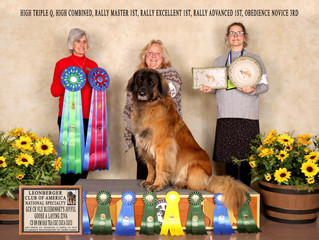 2018 Leonberger National Specialty