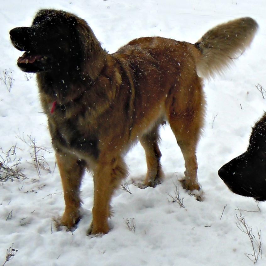 Emee enjoying the snow