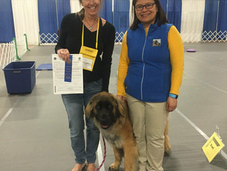 Puppy Challenge: Ruffina earns her CGC and goes to First National Specialty