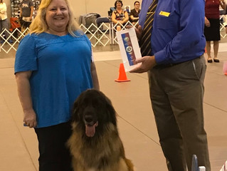 2018 Houston World Series Dog Show