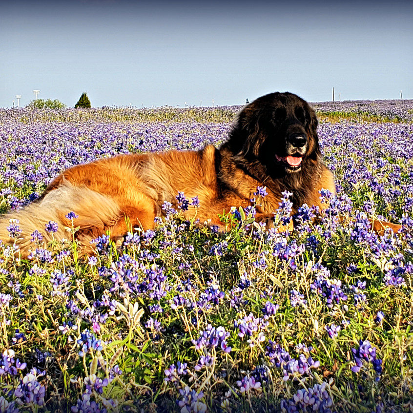 some time in the Bluebonnets