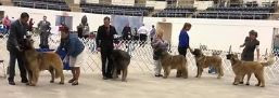 2018 Abilene - Ruffina New AKC CH & Ziva GCHBronze