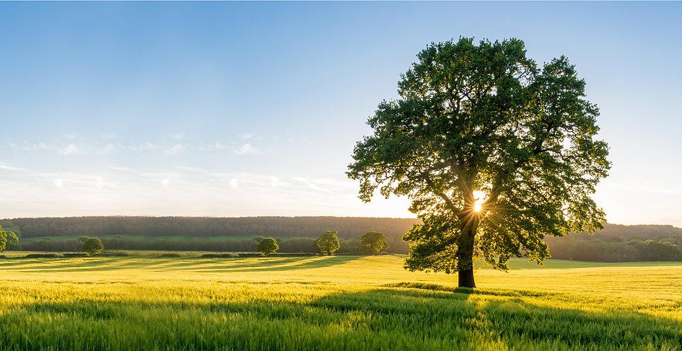 Listening Tree - achieving positive change