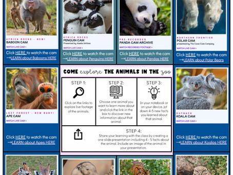 San Diego Zoo Virtual Field Trip!