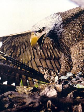 """Bicentennial Eagle"""