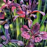 """The Iris"""