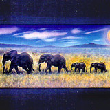 """The Elephants"""