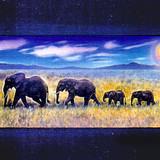 """The Elephants"""