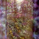 """""""Emerald Rainforest"""""""