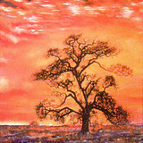"""Sunset Tree"""