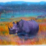 """Rhino"""