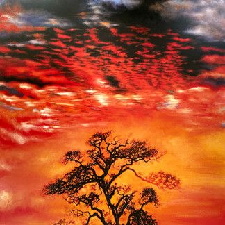 """""""Sunset Tree"""""""