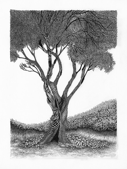 The Spindle Tree I