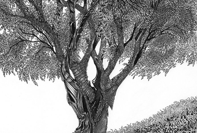 THE SPINDLE TREE II